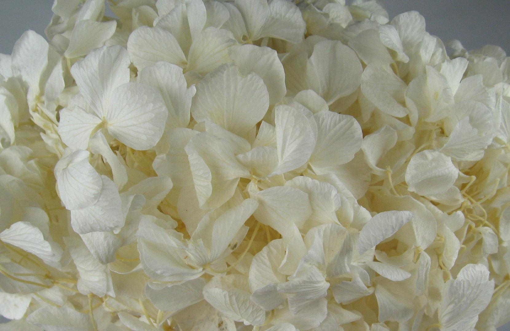 2 packungen hortensien wei decoflorales. Black Bedroom Furniture Sets. Home Design Ideas